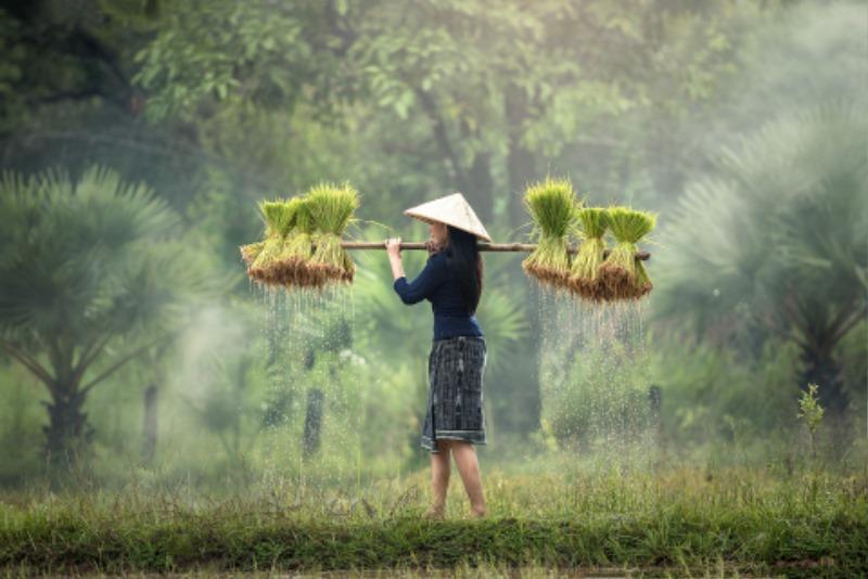 사본 -harvesting-1822578_1920.jpg